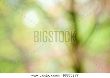 Tree Abstract