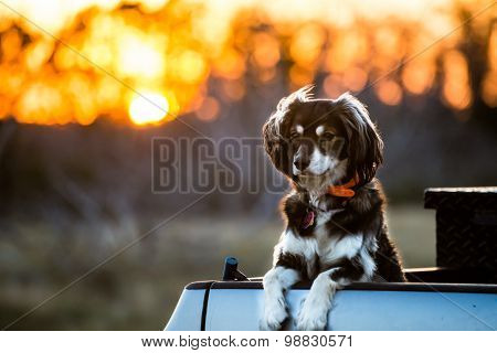 Dog In Front Of A Sunset