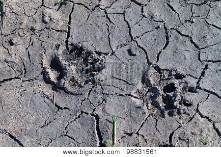 Predator Footprints