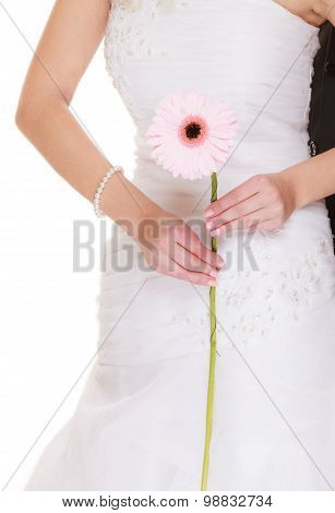 Wedding Day. Pink Flower Gerbera In Bride Hand
