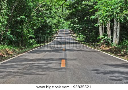 Road And Green Forest