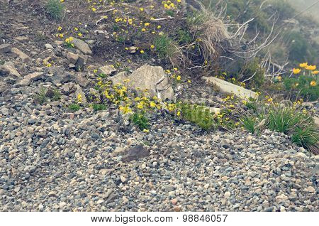 Plants on hillside