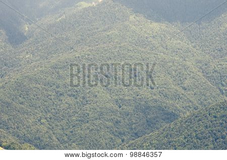 View on the Mountains covered by green forest