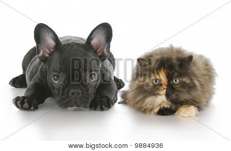 Puppy And Kitten Laying Down