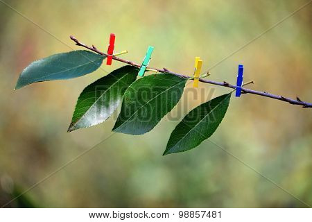 Ecology: the pessimistic nature of the future - on a bare twig with colored clothespins attached gre