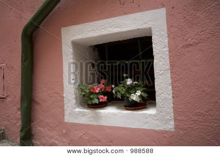 Flower On The Pink Wall