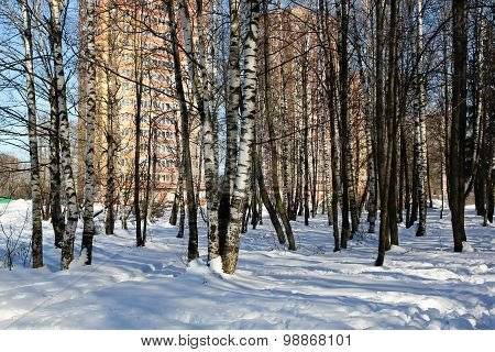 Multi-storey House For Birch