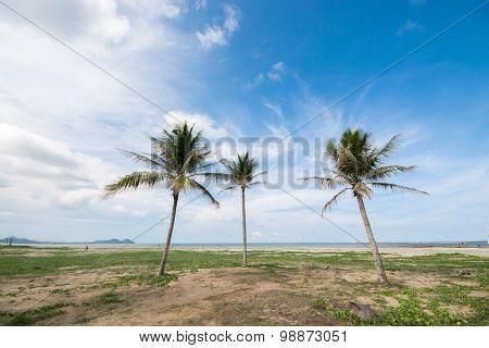 Three Coconut Palm Tree On The Beach