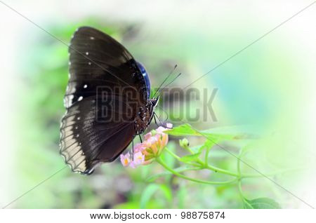 Vintage style close-up of butterfly white isolated background