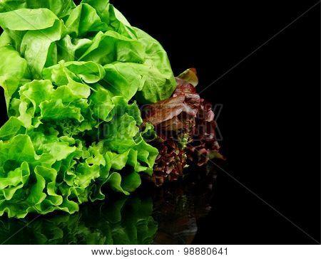 Many Varieties Of Lettuce On Black On The Side