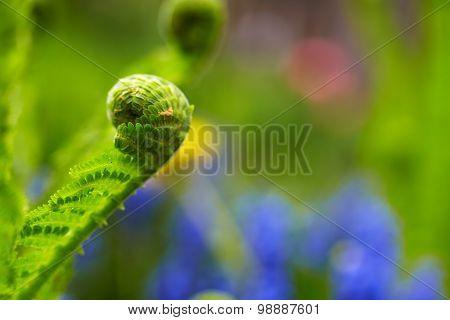 Leaf Fern