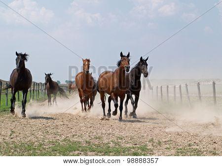 The herd of horse