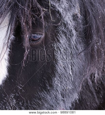 Close up on a wintry horse head.