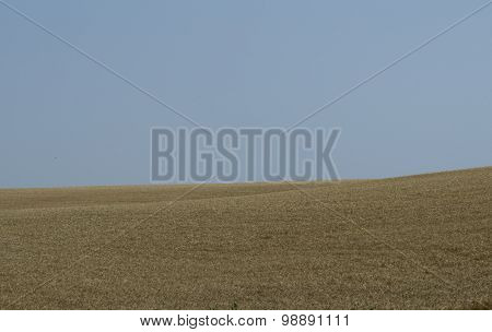 Beautiful Wheat Field With The Blue Sky