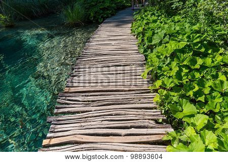 Wooden Path And Lake
