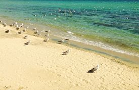 image of flock seagulls  - Beach view with flock of seagulls in the sun - JPG