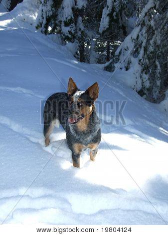 Murphy in deep snow