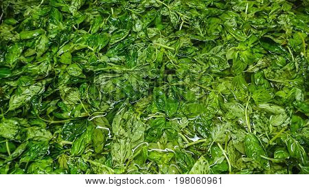 Green fresh basil been washed and sitting in water.