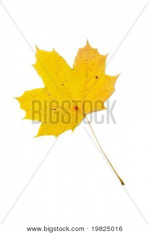 Yellow leaf on white background with light shadow