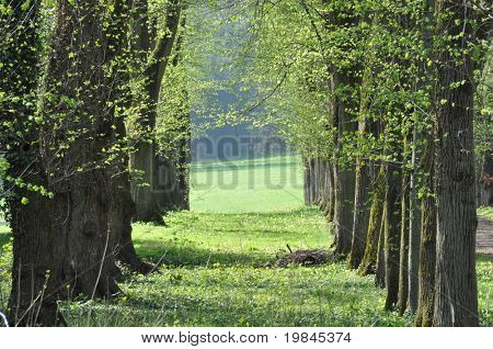 A row of trees