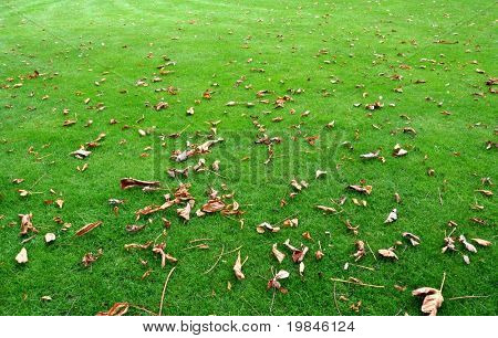Dead leaves on the lawn