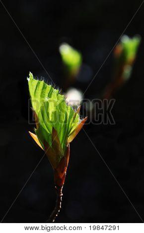 A bud