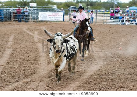 APACHE JUNCTION, AZ - FEBRUARY 26: A rodeo pick-up man corrals a bull during the bull riding competition at the Lost Dutchman Days Rodeo on February 26, 2010 in Apache Junction, Arizona.