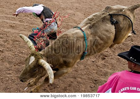 APACHE JUNCTION, AZ - FEBRUARY 26: A cowboy falls off  a bucking bull in the bull riding competition at the Lost Dutchman Days Rodeo on February 26, 2010 in Apache Junction, Arizona.