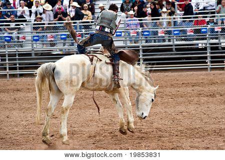 APACHE JUNCTION, AZ - 27 de febrero: Un vaquero monta un caballo bucking en la competencia sin condón en la