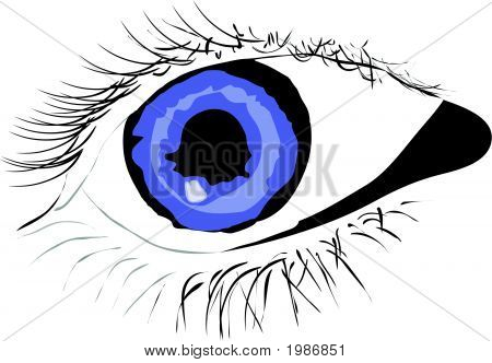 Vector Of Persons Blue Eye