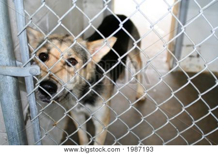 Dog In Kennel
