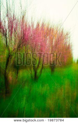 Creative Red Bud Trees