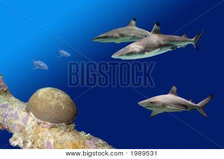 Sharks Reef