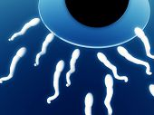 stock photo of zygote  - An image of some sperm about to fertilize an egg - JPG