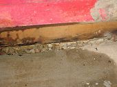 stock photo of water bug  - mold and water damage from basement leak - JPG