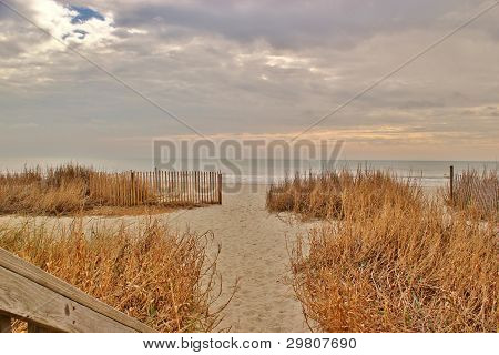 Sand dunes and grasses