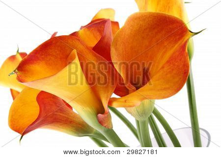 Bouquet Calla