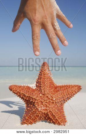 Starfish And Hand