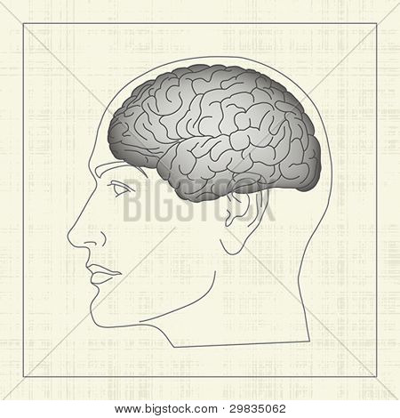 Brain, cerebral hemisphere inside human head, profile