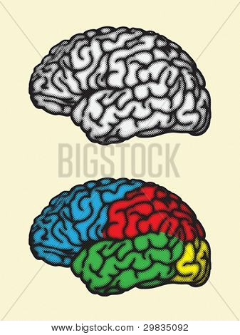 Gehirn, zerebrale Hemisphäre Lappen