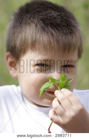 Boy Smelling Leaves