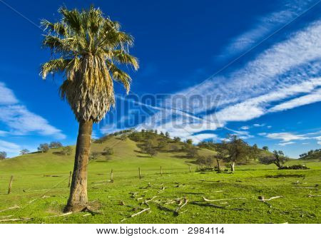 California Farmland With A Palm Tree