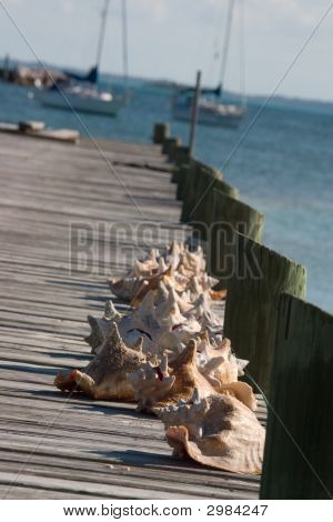 Shells On Dock