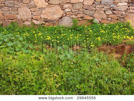 Clearing With Wild Flowers Near The Wall Of Rough Stone. Background. ..