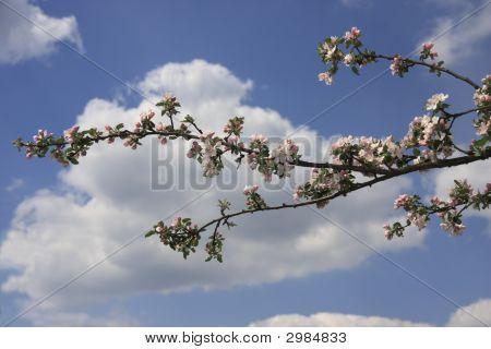 April Blossom