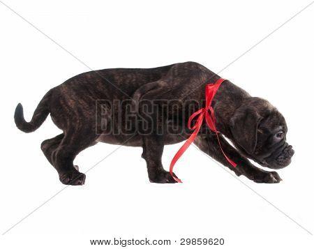 Careful frightened puppy isolated