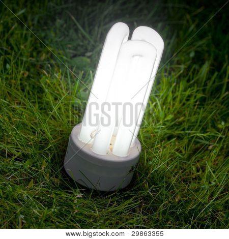 energy saving lamp on the green grass