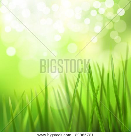 Meadow. Vector illustration.
