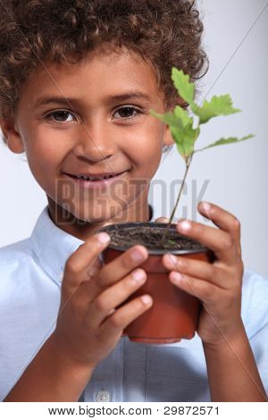 Little boy with a young oak tree