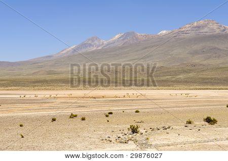 Laguna Pampa Blanca, Peru